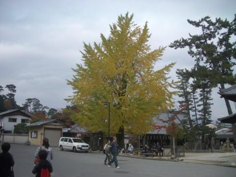 2008-11-18 008